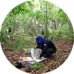 Potencializar as ações ambientais relacionadas com vegetação